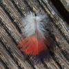 feather_001_t.jpg