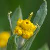 common_everlasting_001_t.jpg